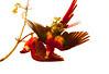 ScarletMacaw Tambor_09-11-06 (337)