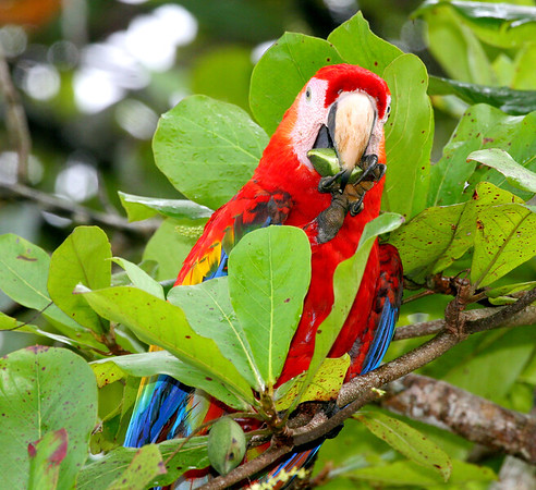 macaws in trees (17)