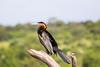 AfricanDarter Chobe_14-03-08__O6B1043