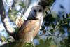 BarnOwl BotGard__O6B0482_2011-12-29-22-23-04