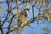 CooperHwk BotGar_7I2B2901_2011-01-01-11-05-13