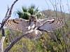 GrtHrnOwl Tucson__MG_1707_2012-03-29-21-10-57