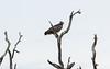 MatialEagle Kruger_14-03-02__O6B0667