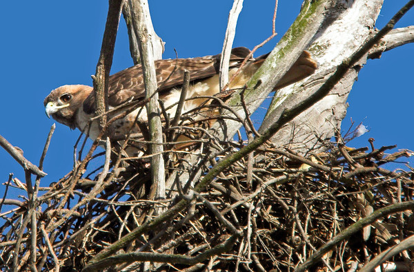 RTH nest CLU_24_11-20-05