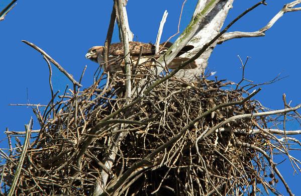 RTH nest CLU_22_11-20-05