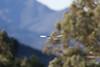 WTK CLU__MG_8355_2011-12-08-20-51-14-2 (2)