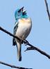 Lazuli SatWiwa_16-05-22_0024