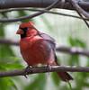 Cardinal Tucson_10-10-23_0029
