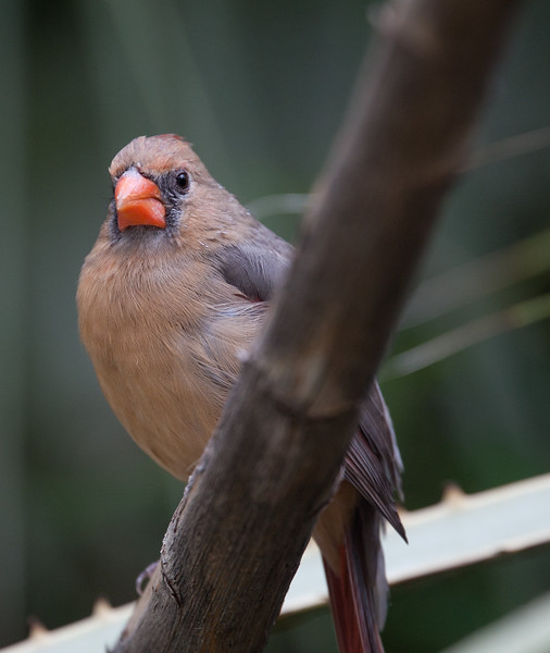 Cardinal Tucson_10-10-23_0001