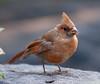 Cardinal_CentPark_09-07-10-0025_090710_25