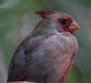Cardinal Tucson_10-10-23_IMG_2372