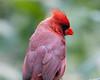 Cardinal_CentPark_09-07-10-0026_090710_26