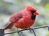 Cardinal_CentPark_09-07-10-0027_090710_27