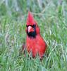 Cardinal_CentPark_09-07-10-0053_090710_53