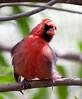 Cardinal Tucson_10-10-23_0030