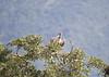 CapeVulture Mohololo_14-03-01__O6B0001