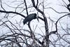 AfOpenBillStork OkavangoDelta_14-03-11__O6B1837