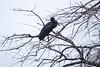 AfOpenBillStork OkavangoDelta_14-03-11__O6B1840