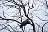 AfOpenBillStork OkavangoDelta_14-03-11__O6B1838