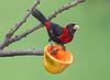 CrimColTanger EcoObservatory_12-10-11__O6B3824