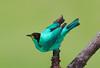 GrenHonCreep EcoObservatory_12-10-11__O6B3859