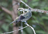 Palm Tanager_07-08-12_0003