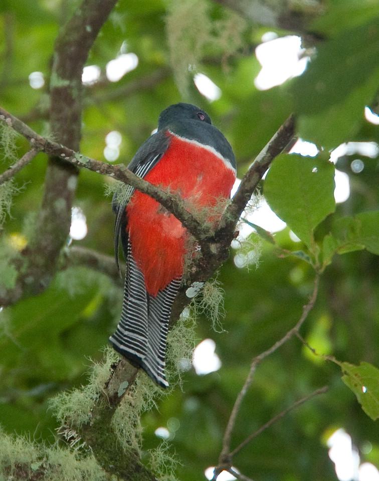 Quetzal Savegre_09-11-13_7I2B3516