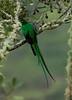 Quetzal Savegre_09-11-14_7I2B3830