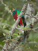 Quetzal Savegre_09-11-14_7I2B3747
