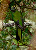 Quetzal Savegre_09-11-14_7I2B3838