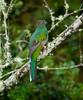 Quetzal Savegre_09-11-14_7I2B3771