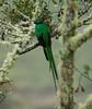 Quetzal Savegre_09-11-14_7I2B3810