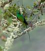 Quetzal Savegre_09-11-14_7I2B3845