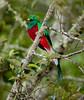 Quetzal Savegre_09-11-14_7I2B3755
