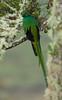 Quetzal Savegre_09-11-14_7I2B3811