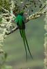 Quetzal Savegre_09-11-14_7I2B3824