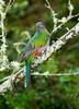 Quetzal Savegre_09-11-14_7I2B3776