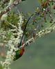 Quetzal Savegre_09-11-14_7I2B3833