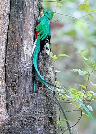 Quetzal CR_11_02-21-06
