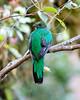 Quetzal CR_59_02-21-06
