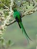Quetzal Savegre_09-11-14_7I2B3828