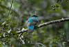Quetzal Savegre_09-11-14_7I2B3785
