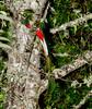 Quetzal Savegre_09-11-14_7I2B3716
