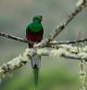 Quetzal Savegre_09-11-14_7I2B3841