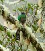 Quetzal Savegre_09-11-14_7I2B3807