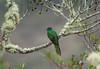 Quetzal Savegre_09-11-14_7I2B3791