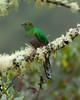 Quetzal Savegre_09-11-14_7I2B3835