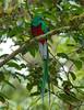 Quetzal Savegre_09-11-13_7I2B3491