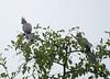GoWayBird Polokwane _14-03-03__O6B0718