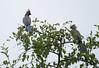 GoWayBird Polokwane _14-03-03__O6B0721